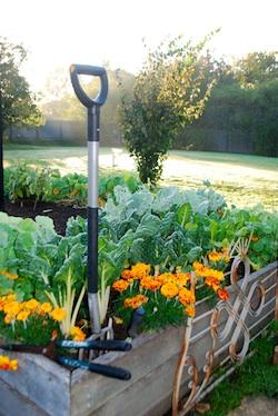 RedFeather Garden 250x374
