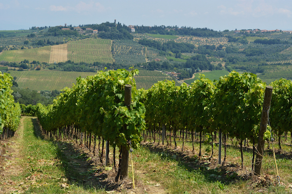 Siena_vineyards 600x400