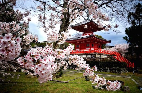 Japan Diakiju Temple Arashiyama Blossom 600x393