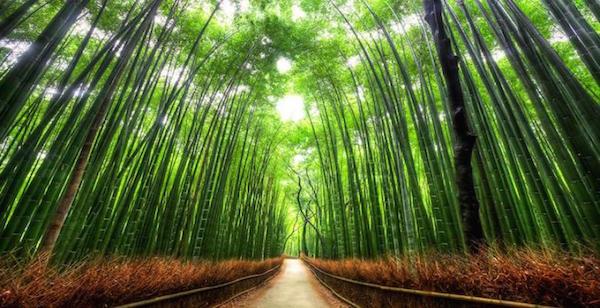 arashiyama-bamboo-600x308