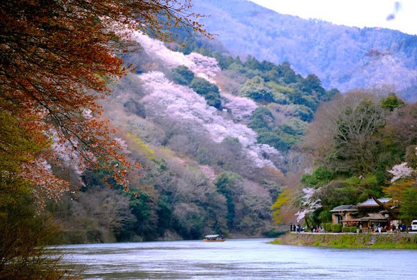 arashiyama-cherry-blossom-600x400