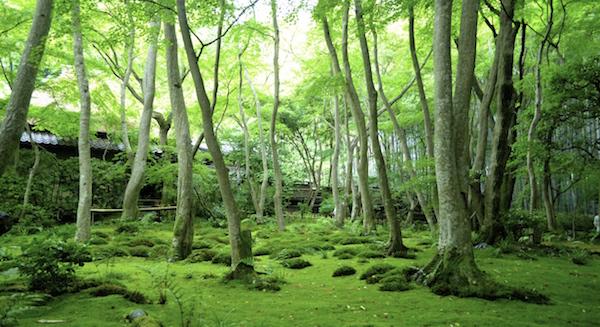 arashiyama-gioji-moss