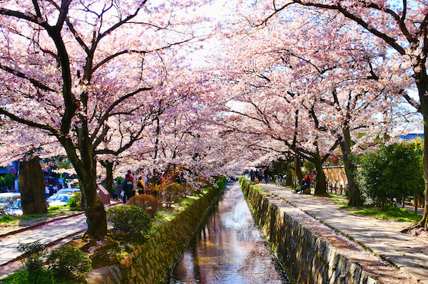 kyoto-philosophers-cherry-blossom-2-600x400
