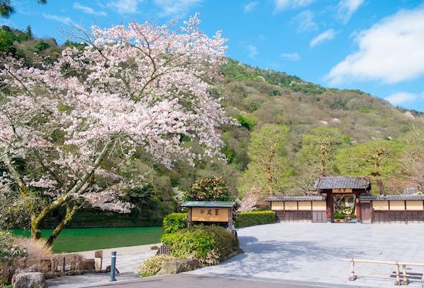 suiran-gate-spring-image
